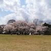 半木の道からの『京都府立植物園』でアーシング、とお食事スポット【2019年・京の桜】