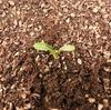 期待を裏切る成長