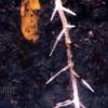 甘露メロンの種!生えた根が伸びるまでをまとめた9日間