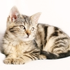 猫の運動不足とストレス解消方法は、高い所に上る+ケージの活用+おもちゃ遊び
