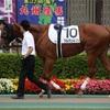 【シルク】出資馬近況2017.08