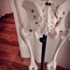 骨盤と免疫力の関係