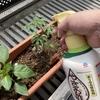 植物デストロイヤーの僕でも家庭菜園で収穫できたので紹介 野菜は害虫との闘い