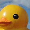 1年ぶりのアヒルちゃん!すみのえアート・ビート2017にラバー・ダック登場(クリエイティブセンター大阪篇)
