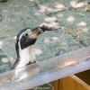 小諸市動物園でペンギンの流しアジを観てきた