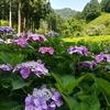 京都の梅雨の風物詩。咲き乱れる紫陽花に会いに「三室戸寺」♡