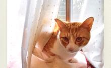 ネコ英語「カーテン大好き」