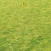 トムソンコース/5月30日(水)/79