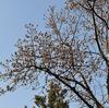 クリッターのシンボルツリー