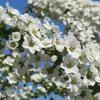庭の春の花