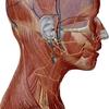 耳の迷走神経についてのレビュー