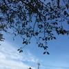 今日は秋晴れお散歩日和。