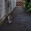 猫、飼いたいって