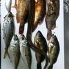 僕はあらゆる水産物を賞味したい。~日本海の魚は鉄板で美味い~