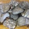 【板前レシピ】ナガラミ/シッタカ/塩茹で/一手間加えた塩茹での作り方
