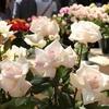 シェアブリス 5本組花