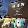 修禅寺で春うらら!足湯といちご狩りが楽しめます!