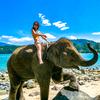 今日も象さんビーチ日和