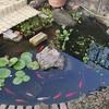 自作池の水漏れ対策