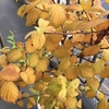 今年の秋は短い
