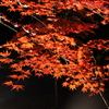 月の石紅葉公園と昭和記念公園で撮った紅葉を載せてみる