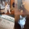 最近、お友達がどんどん猫を飼い始めているw
