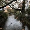 【写真】京都の通りKYOTO's street