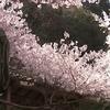 蓮如上人ゆかりの地『本善寺』|関西ハイキング(奈良県吉野町)