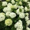 紫陽花を見に行ってきました【名古屋市 茶屋ヶ坂公園】
