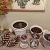 ヒヤシンスとアマリリス:室内用鉢植えと水栽培