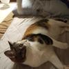 【愛猫日記】毎日アンヌさん#310