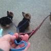 3匹で予防接種と散歩