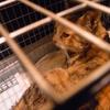 2013 3月 のら猫手術。