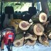 薪ストーブ始生代36 茶畑山で薪仕事②~バームクーヘン杉を割る