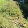 畦の草刈りと水の仕切り板を外しました。疲れました(^^;