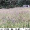 矢並湿地の植物