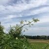 夏の草花ふりかえり