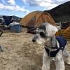 犬キャンプに最適なフード入れ (ミニチュアシュナウザーとキャンプ)