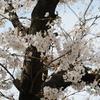 花紀行~その15『桜2021』