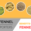 Indian Fennel Seeds Exporters Tell Reasons To Eat Fennel Seeds