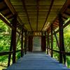 京都東山、高台寺の日本庭園にて