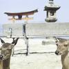 写真上達への道!広島の世界遺産!宮島を取り尽くせ!