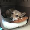 冬の寒さ対策にオススメの犬用暖房グッズはこれ!