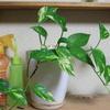 オススメ観葉植物を大学農学部で勉強した僕が紹介する