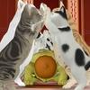 ねこアーチの猫さんが遊んでくれました!