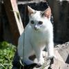 迷子の猫を探す6つの方法 ~早くみつかりますように~
