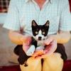 初心者のための猫の育て方