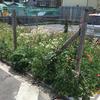 雑草による花壇を見て考えた