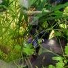 ミクロソリウム植栽7ヶ月目