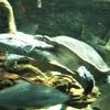 ◆池袋サンシャイン水族館
